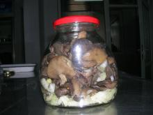 Canned Suillus Luteus Marinated in 580ml glass jars