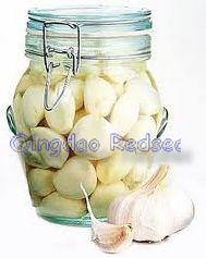 Fresh Pickled Garlics