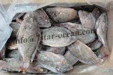Frozen Black Tilapia Fish Farm Raised