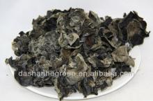 Dried black fungus and mushroom plant