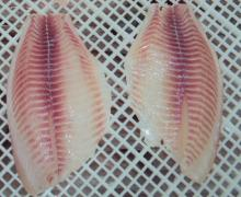 None CO tilapia fillet
