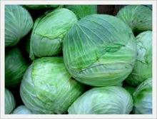 fresh and high quality cabbages