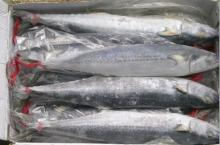 Supply spanish mackerel