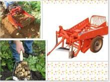 Garlic and potato harvester machine