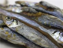 Good quality frozen dried capelin