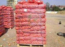 Egyptian Yellow Onions by Fruit link
