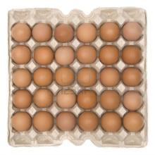 Quality Fresh chicken eggs