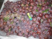 Chinese fresh red grapes for sale