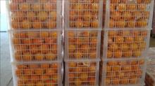 Sweet navel orange for hot sale