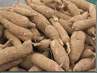 Available Cassava