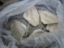 Frozen Tilapia Skinless Fillet
