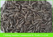 New 2013 Sunflower Seeds, American Type 5009,Inner Mongolia Origin