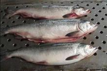 Whole sale salmon from china supplier