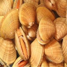 Wholesale shellfish with fresh ice products