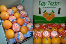 Egyptian Valencia Oranges by Fruit Link