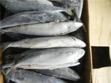 Fish Grade A frozen mackerel