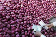 2012 Fresh onion Round Fresh Red Onion
