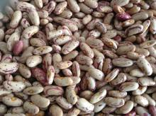 Long Shape Light Speckled Kidney Beans, 180-200PCS