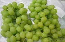Thompson Seedless Sweet Fresh Grapes