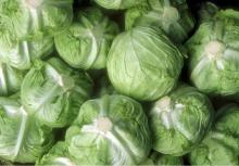 Cabbage Fresh
