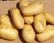 Yellow skin yellow flesh, potatoes