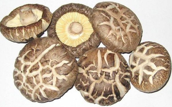 lose weight fast with chinese-mushroom