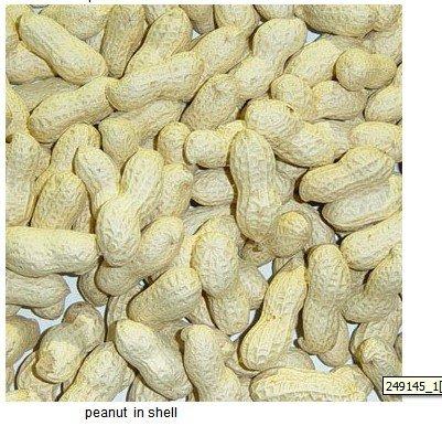 arachis hypogaea story