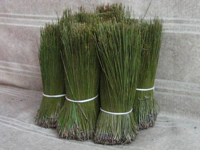 Pine Needle Tea Products China Pine Needle Tea Supplier