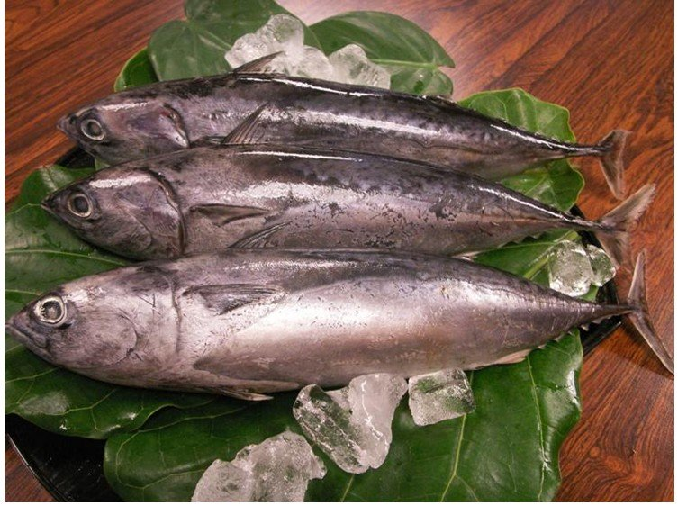 Good quality frozen bonito products china good quality for Good fish names