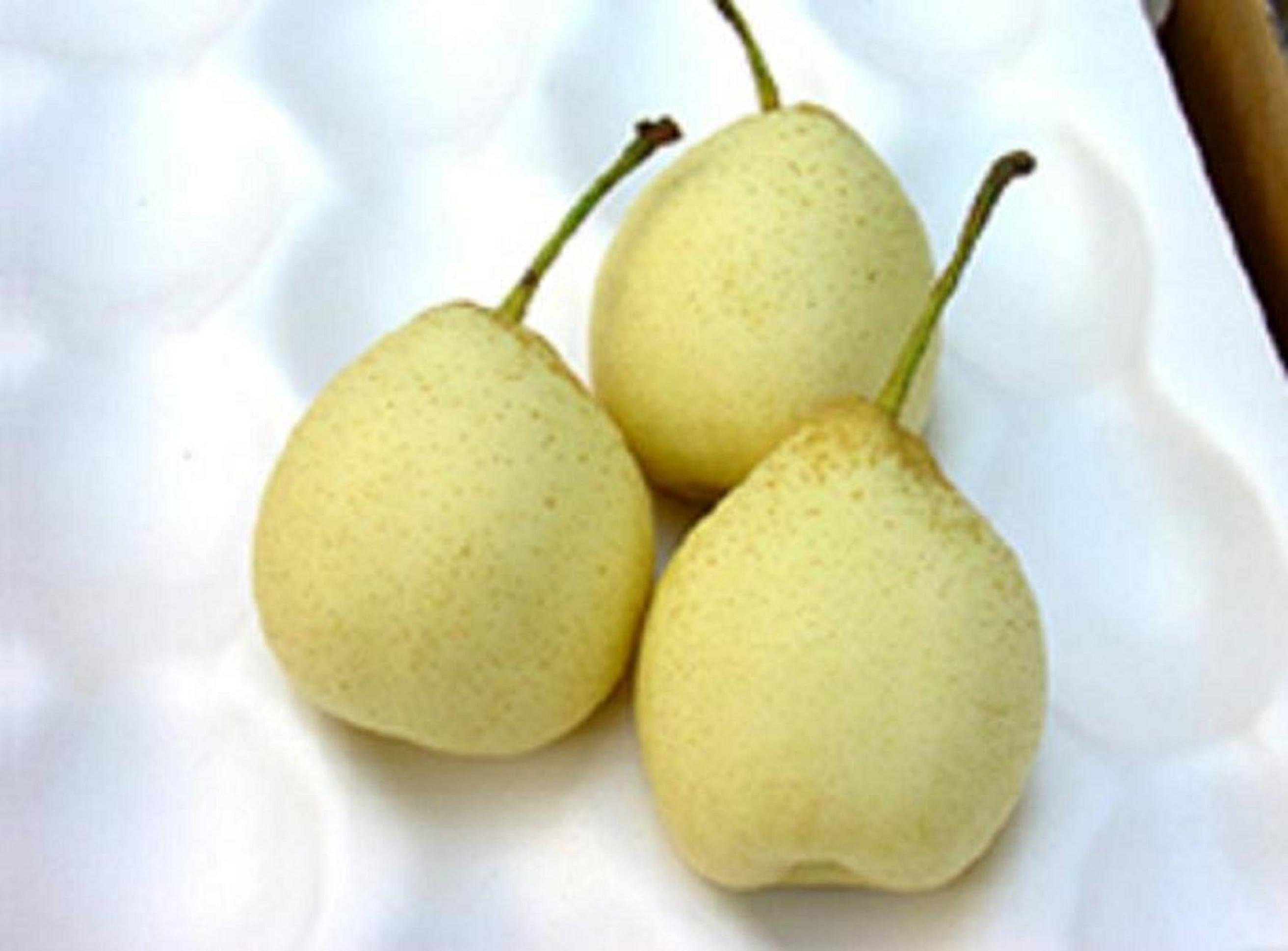 Chinese Ya Pear in Carton products,China Chinese Ya Pear in Carton supplier2625 x 1938 jpeg 219kB