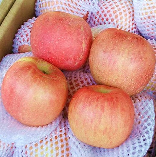 Chinese apple 100 size products china chinese apple 100 for 100 degree chinese cuisine