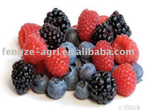 2011 Individual  Quick   Frozen   blackberry  good quality and competitive price