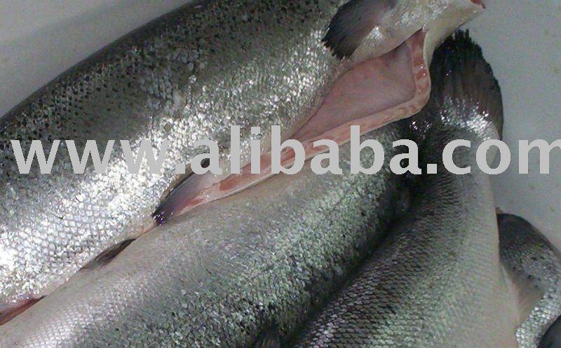 Best frozen fish products cameroon best frozen fish supplier for Best frozen fish to buy at grocery store