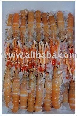Norway Lobster