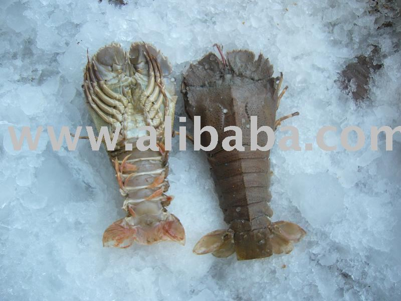 Frozen Slipper Lobster