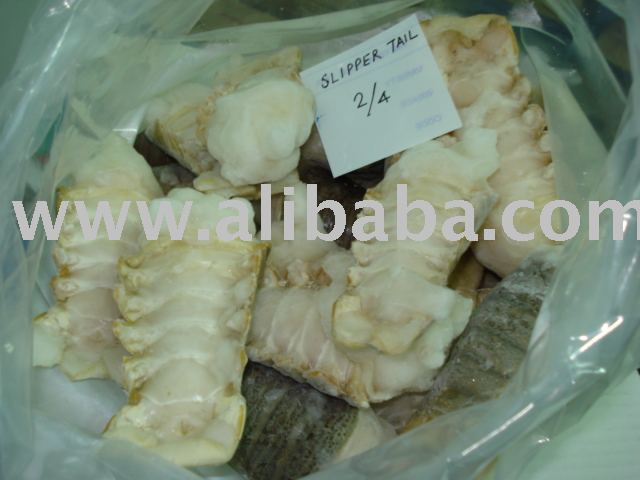 Slipper Lobster Tails