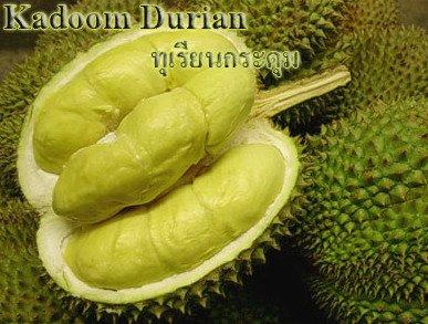 Durian (Mon Thong)