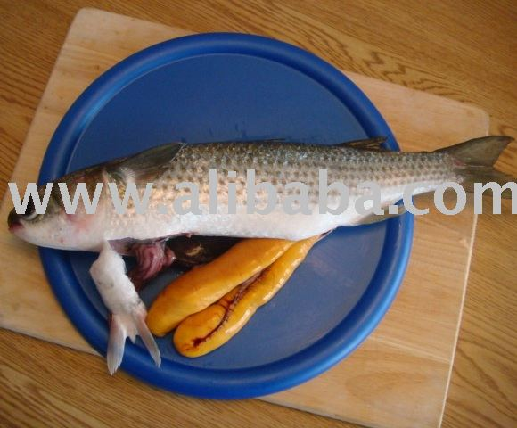 Split Mullet w/Red Roe