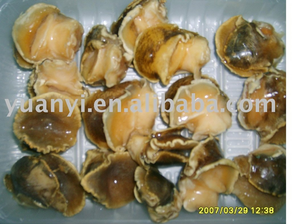 frozen boiled moon snail meat