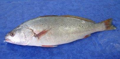 marine fish essay