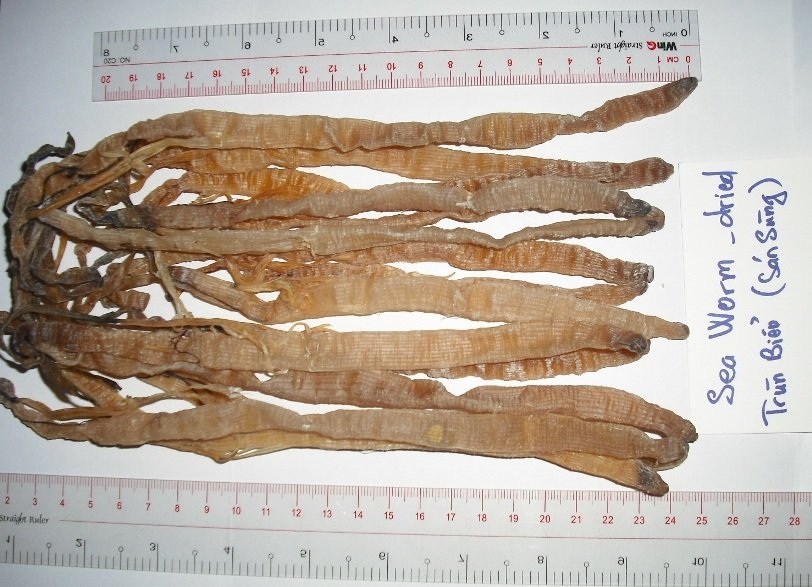 Dried sea worm