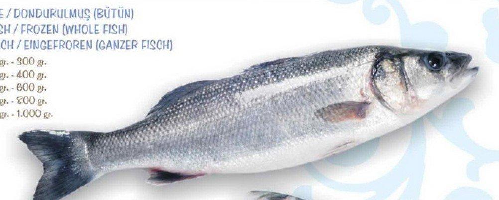 Turkish sea bass fillets products turkey turkish sea bass for Turkish sea bass recipe