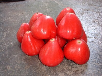 Wax Jambu, Fruit