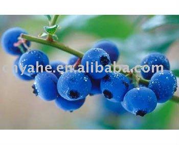 Hot blueberry flavour powder