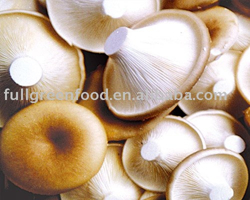 Top Quality Fresh Clitocybe maxima