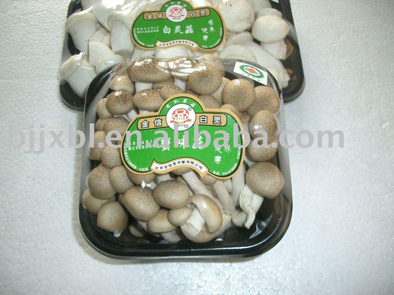 white shimeji mushroom how to cook