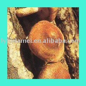 agricultural food mushroom