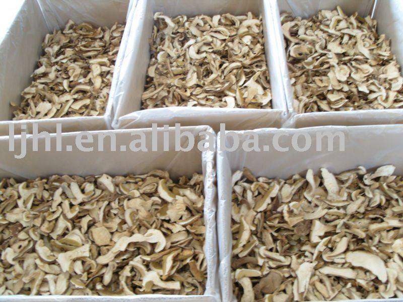 boletus wild mushroom porcini