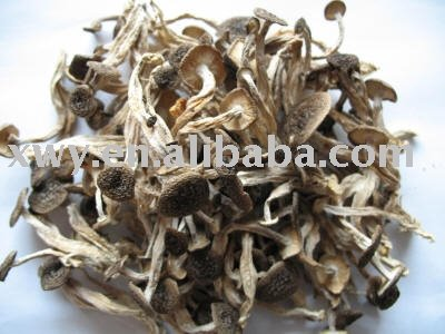 Dehydrated tea-tree mushroom