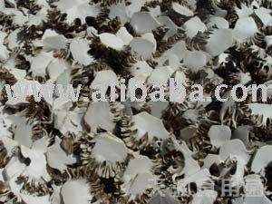Maitake Mushroom Slice-Grifola frondosa